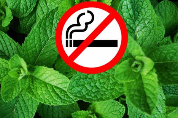 Mentollü sigaralar raflardan indirilecek mi