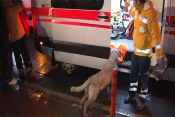 Acil serviste sahibini yalnız bırakmayan köpek Türkiye gündemine bomba gibi düştü