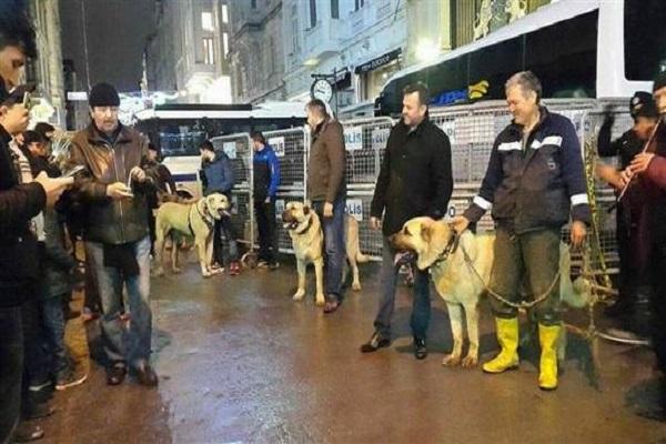 İstiklal Caddesinde kangal köpekleriyle Hollanda protestosu