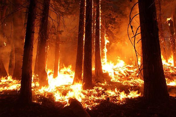 Antalya'da orman yangını çıktı, 1.5 hektarlık alan yandı