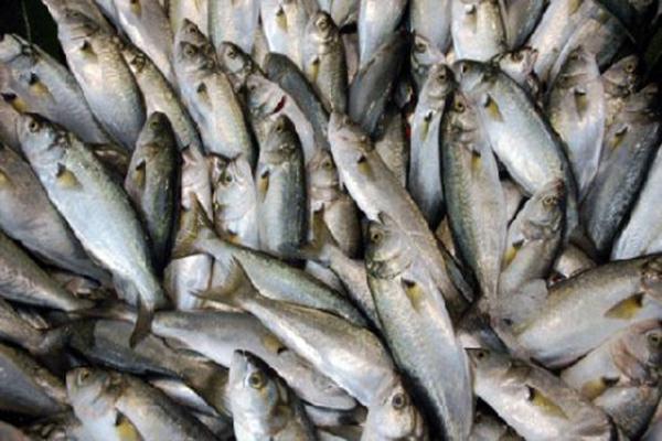Rusya tonlarca balığı geri çevirdi
