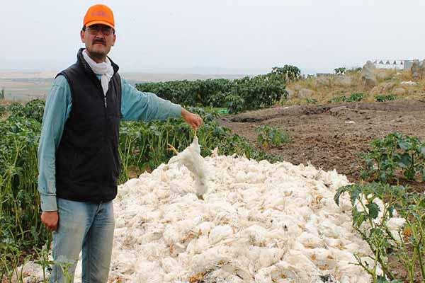 Türkiye'de kuş gribi yayılıyor mu