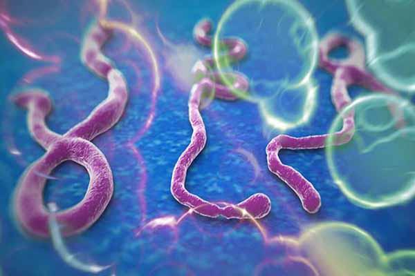 Ebola virüsü ABD'de yayılmaya devam ediyor
