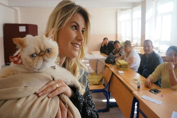 Oy kullanmaya kedileriyle gittiler