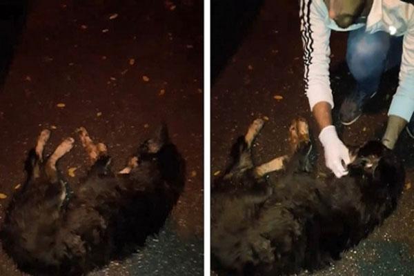 Sosyal medya Sapanca'daki köpekleri konuşuyor