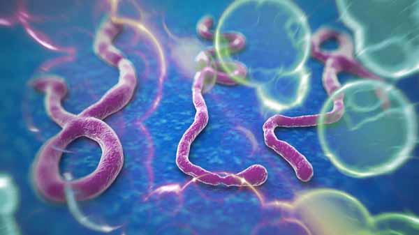 Ebola bulaşan doktor tedavi altına alındı