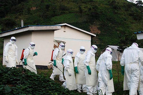 Ebola salgını, meyve yarasasından çıkmış