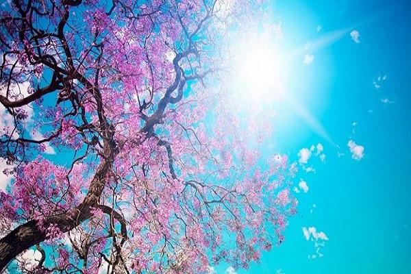 Sıcak hava etkisi devam edecek mi 12 Mayıs hava durumu