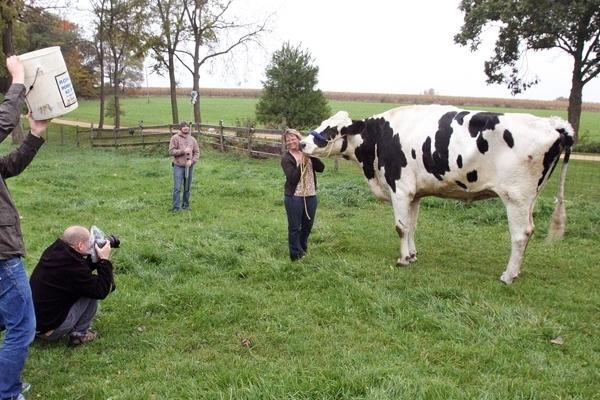Guinness Dünya Rekoru kıran inek