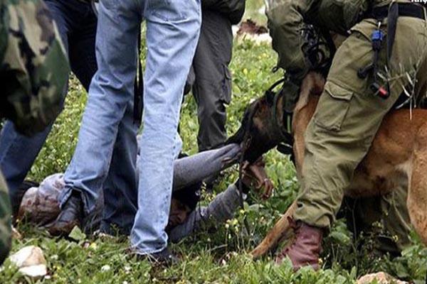 İsrail askerlerinden Filistinli gence işkence