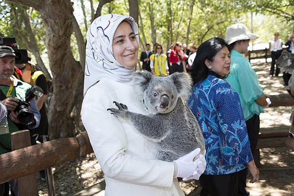 Sare Davutoğlu koalaları çok sevdi