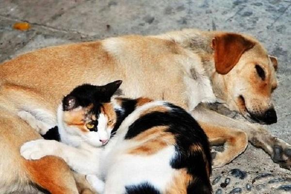 Hayvanlara zarar verenler hapse atılacak