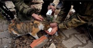 TSK'nın 4 Ekim Hayvanları Koruma Günü paylaşımı büyük beğeni topladı