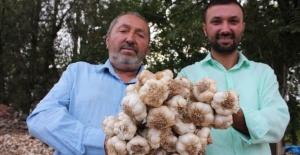 İngiltere'de öğrenim gördü mühendis oldu, Türkiye'de sarımsak ihraç ediyor