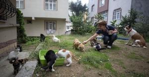 Emekli maaşıyla evindeki 50 hayvan dostuna bakıyor