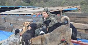 Sokak hayvanlarına yönelik şiddete karşı açlık grevine başladı